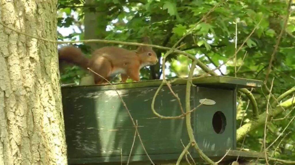 eekhoorn nestenkast